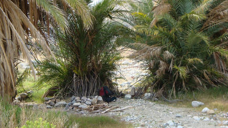 The palm tree camping area (Sespe)