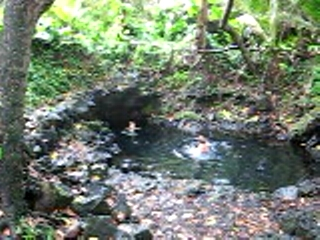Pool in the jungle (Pohoiki)
